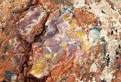 foto of paleozoic  - colorful petrified wood detail - JPG
