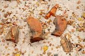 stock photo of paleozoic  - large and small pieces of petrified wood - JPG