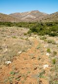 Fort Bowie desert trail poster