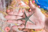 Fisherman Holding Natural Five Point Starfish In His Hand With The Fishing Net Background. Starfish  poster