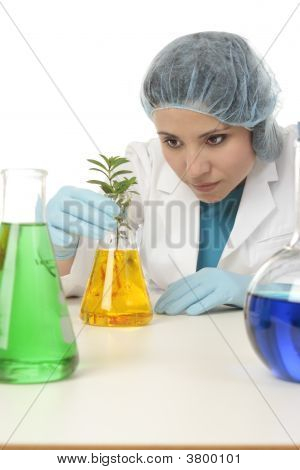 Scientist With Plant In Research Lab