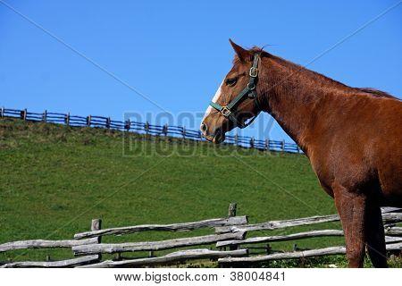Sorrel Horse