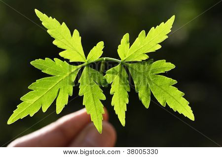 Baby Plant-new Life