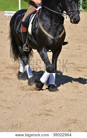 Horse Wearing Leg Bandages