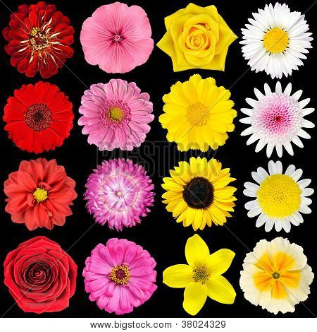 Various White, Yellow, Pink And Red Flowers Isolated On Black
