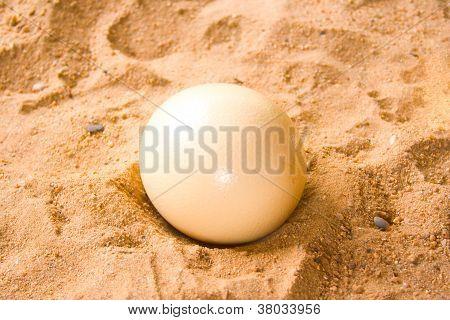 Ostrich Eggs.