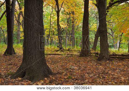 Puerta del bosque