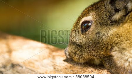 Closeup Tree Shrew