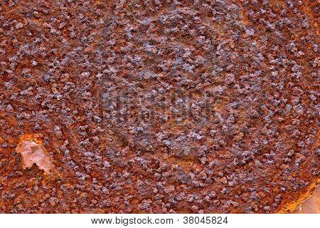Patrón decorativo de moho