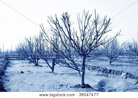 Fruit Trees In An Orchard