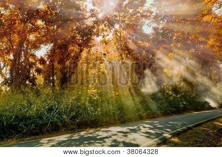 Sun Ray Light At Autumn Forest