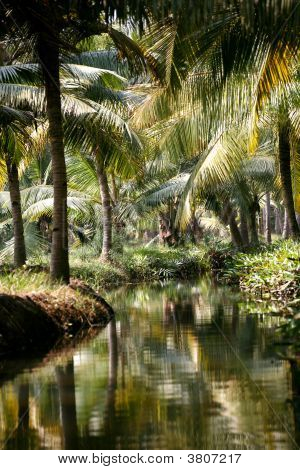 Palm Trees And River