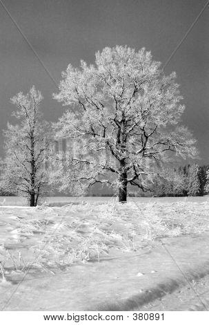 zwei Winter Bäume