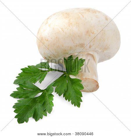 Champignon Mushroom And Parsley Leaves