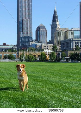 Downtown Cleveland Skyline with Blue Eyed Dog