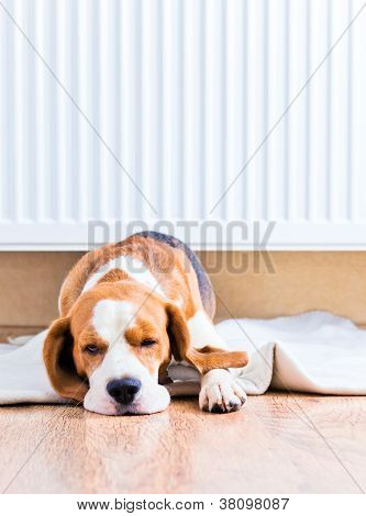 The Dog  Near To A Warm Radiator