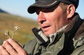 foto of edelweiss  - Romantic man breathes scent of a flower edelweiss - JPG