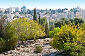 foto of funeral home  - Ancient Jewish Cemetery in Jerusalem among the Trees - JPG