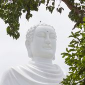 Buddha, Landmark On Nha Trang, Vietnam poster