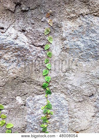 Little Leaf Big Challenge