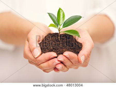 Handful Of Soil With Young Plant Growing