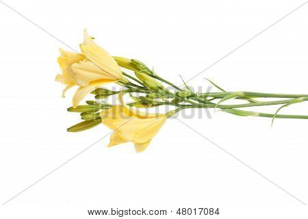 Day Lilies Bouquet