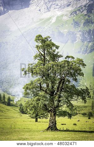 Tree With Smoke In Alps