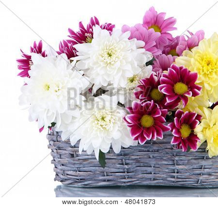 Bouquet of beautiful chrysanthemums in wicker basket isolated on white