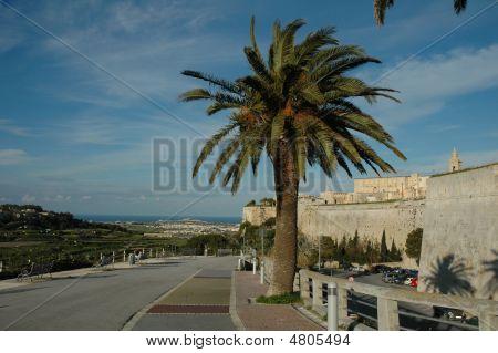 City Walls And Palm Tree. Malta