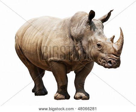 huge rhino isolated on white