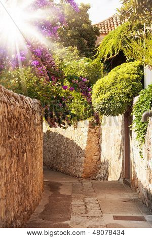 Mittelmeer-Straße mit Blumen und Bäumen