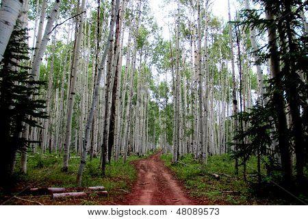 Aspen Trail...
