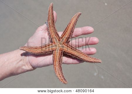 The Bottom Of  A Living Red Starfish