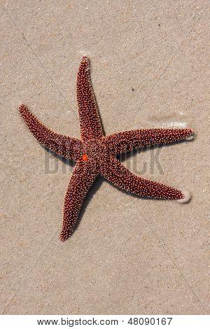 Red Starfish On The Beach