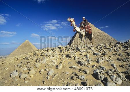 Low angle view of a camel rider by pyramids of Giza