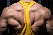 stock photo of muscle builder  - male body builder flexing his back in gym - JPG