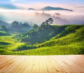stock photo of cameron highland  - Wood floor over tea Plantations at Cameron Highlands Malaysia - JPG