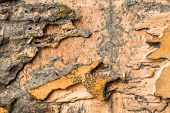 stock photo of termite  - Damaged wood box eaten by termites in Thailand - JPG