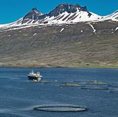 stock photo of iceland farm  - aquaculture salmon fishing farm enclosure and boat in fjord Iceland sea fish farming in round net fishing industry Atlantic salmon - JPG