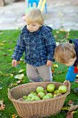 foto of crip  - Two little siblings in autumn garden with basket full of apples