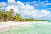 pic of coco  - Idyllic tropical beach with turquoise water and trees near the water at Cayo Coco  - JPG