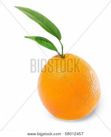 Orange isolated on White Background, Fruit