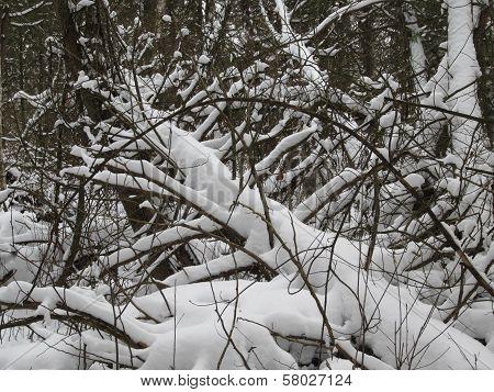 Winter Woods Natural Sculpture