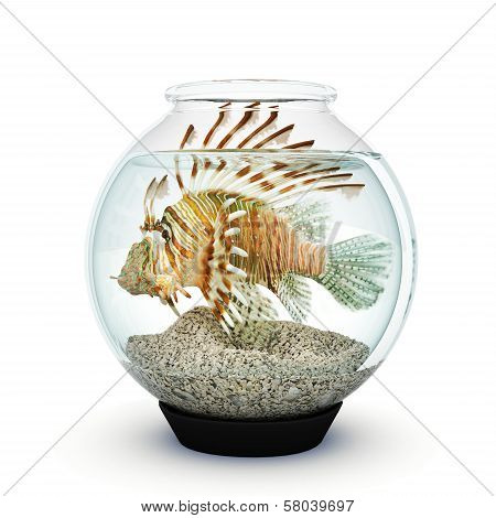 Lion fish to big for the fishbowl.