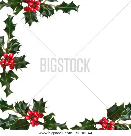 Holly Leaf  Border
