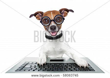Dog using a keyboard