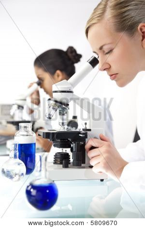 Female Scientific Research Team Using Microscopes In A Laboratory
