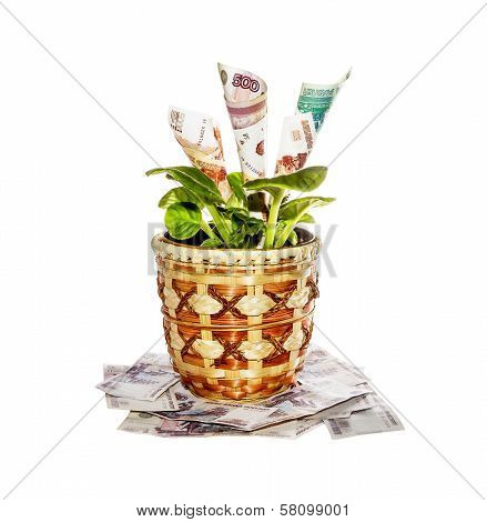 Indoor Plant With Money Bills