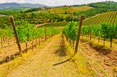 stock photo of plowed field  - Hill of Tuscany with Vineyard in the Chianti Region - JPG