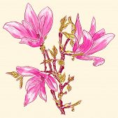pic of japanese magnolia  - Vector illustration of Magnolia branch - JPG